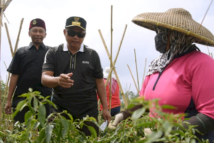 Uu Ruzhanul Tinjau Potensi Agrowisata di Sukabumi Utara, Wisata Jabar,