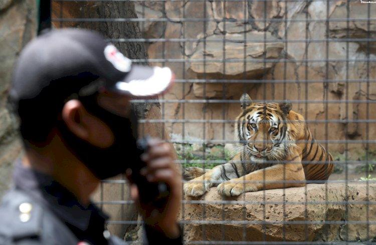 Dampak PPKM, Kebun Binatang Bandung Potong Angsa hingga Rusa Demi Pakan Satwa