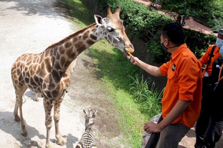 Kebun Binatang Bandung Batal Potong Angsa dan Rusa untuk Pakan Harimau-Macan