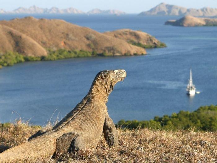 Gubernur NTT Minta UNESCO Riset dan Diskusi Dulu Soal Taman Nasional Komodo