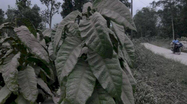 Hujan Abu Merapi Terjadi di Sejumlah Desa di Magelang