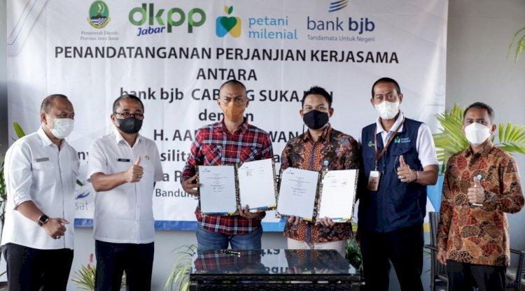 Bank bjb dan Kelompok Ternak Haji Aang Gunawan Sepakati Budidaya Penggemukan Sapi